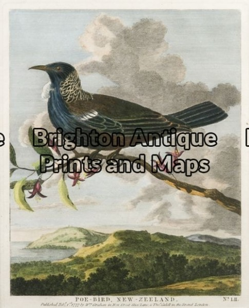 20-413 – New Zealand Poe Bird Anon – circa 1777 Hand coloured copperplate engraving 17cm X 21cm Condition A+