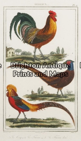 20-414 – Poultry Buffon – circa 1790 Hand coloured copperplate engraving 9cm X 15cm Condition A+