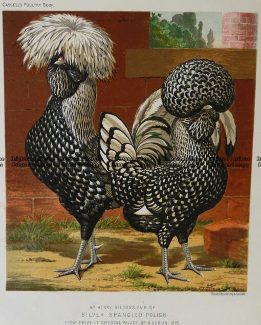 20-425  Poultry by L Wright  c.1880