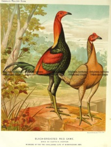 20-427  Poultry by L. Wright  c.1880