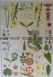 21-354  Botanical by Owen c.1856