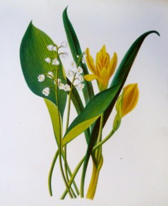 21-368  Botanical - Lilly of the Valley  c.1870
