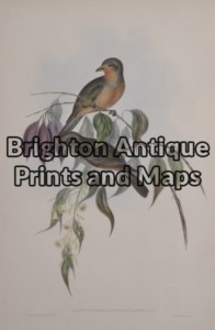 24-405  John Gould Birds of Australia 1840 - 48