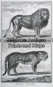 25-306 - Animals - big cats Buffon - circa 1770 Copperplate engraving 20cm X 33cm Condition A+
