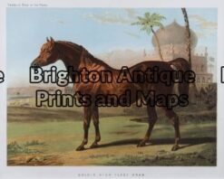 25-308 - Animal- horse Cassell - circa 1880 Chromolithograph 23cm X 15cm Condition A+