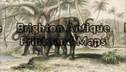 25-311 - Animal - Elephant Goldsmith - circa 1862 Hand coloured engraving 20cm X 12cm Condition A+