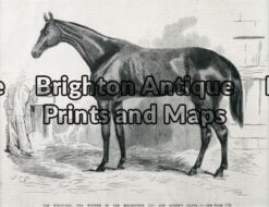 25-316 - Animal - Horse Racing Melbourne Cup S T Gill - circa 1867 Wood engraving 23cm X 18cm Condition A+
