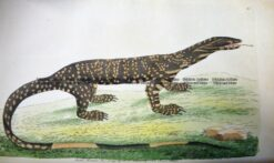 25-338  Australian Variegated Lizard by Shaw & Nodder  c.1791